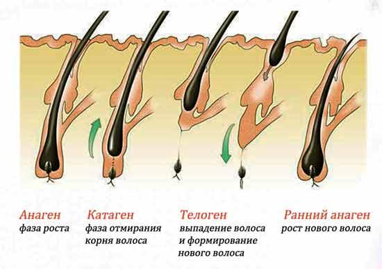 Можно ли после лазерной эпиляции выщипывать волосы