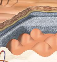 Нижние слои дермы – место, где зарождаются причины большинства форм пигментации