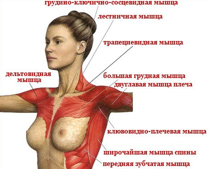 Как увеличить грудные железы в домашних условиях фото