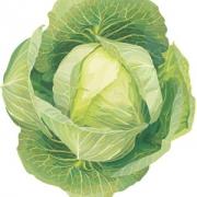 Что содержится в капусте белокочанной?