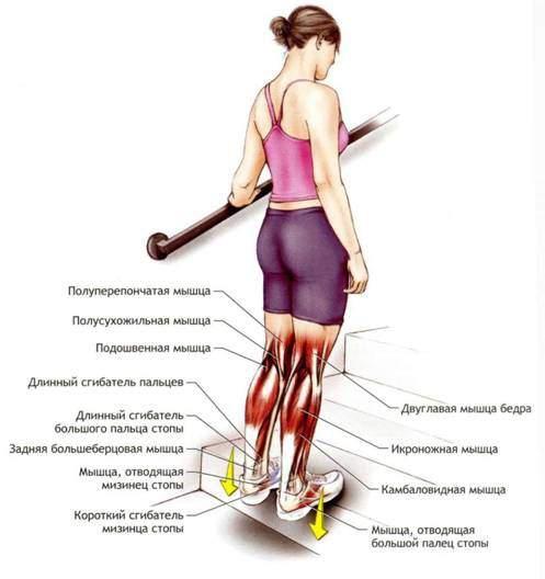 растяжка икроножных мышц для похудения
