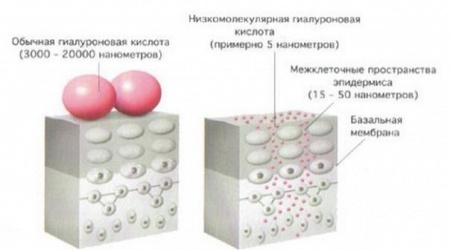 Низкомолекулярная гиалуроновая кислота косметика